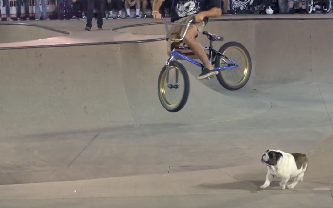 FLBMX Orlando Skatepark Contest Highlights